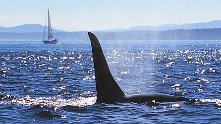 Whale Watching in Victoria © Tourism Victoria