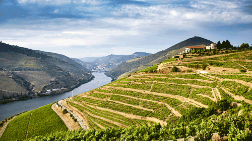 Weinberge im Douro-Tal - (Foto: ©Matt Munro/LP TRAVELLER MAGAZINE COLLECTION)