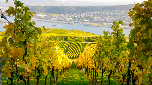 Bingen am Rhein - (Foto: ©instamatics/Getty Images/iStockphoto)