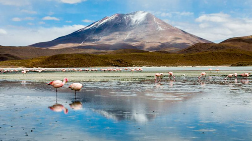 Flamingos auf einer Wasserfläche in der Salar de Uyuni - (Foto: © roberto zampino/BEAUTIFUL WORLD COLLECTION)