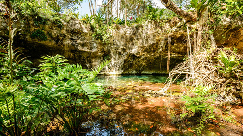 Blick aus der Gran Cenote, Yucatan, Mexico - (Foto: ©John Crux Photography/Getty Royalty Free)