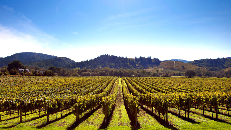 Sonnengeküsste Weinberge in Sonoma County - (Foto: © Geri Lavrov / Getty Images)