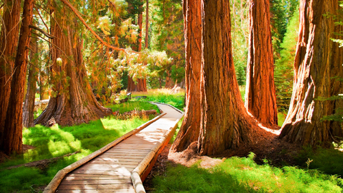 Sequoia National Park, California - (Foto: © Quan Yuan, Getty Images)